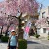 背景は岐阜伊奈波通の枝垂桜