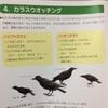 ハシブトガラスとハシボソガラスの簡単な見分け方 differentiate crows