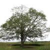 豊頃町「はるにれの木」 北海道放浪の旅 12日目⑨