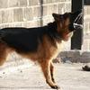 愛犬はエサの時間になると性格が豹変し吠えまくる