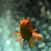 🐠足立区生物園 水の生き物🐡