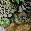 大島水場のヤツボ(神奈川県相模原)