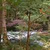 静岡旅⑤ 鐘山苑のお庭が素晴らしすぎる件…