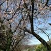 今年の桜第一弾は、やっぱりワムさん!!(3461レ)