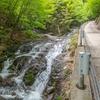 新緑の渓流を遡り柳沢峠へ