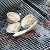 バカ貝(青空レストランで紹介)あおやぎのお取り寄せ 姫貝 三重県津市伊勢湾