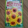 自宅に向日葵の種を植えてみました!!