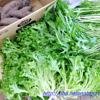 レタスに水菜、薩摩芋など伯母からもらう野菜は給料ゼロ家庭には助け船です。