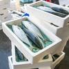 2017年12月11日 小浜漁港 お魚情報