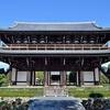 東福寺の石蕗、三門の近くで咲いています。