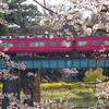 2019/4/5 岡崎公園に行ってみた。