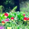 【新宿御苑】子連れお出かけ花と新緑を満喫してきました