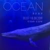 本日から一般公開、IFCモールの【Wonders of the ocean展】