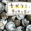 海のカタツムリ?!ナガラミ(ダンベイキサゴ)を食べるよ【九十九里浜産】