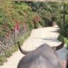 竹富島で水牛車&サイクリングを楽しもう!~石垣島からの行き方もご紹介!