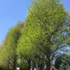 相模原の春 新緑の季節 スタート!