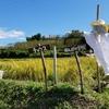 チャウス田んぼの学校~稲刈りと陶芸教室【活動レポート】