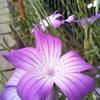 散歩してたらつくりものみたいな花を見つけた話。