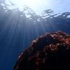 初島でダイビング!熱海から30分の海でブルーチャージ