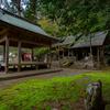 京都・小野 - 岩戸落葉神社の散り椿