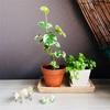 名もなき植物を迎える
