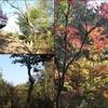 歩いて再び京の都へ 旧中山道69次夫婦歩き旅  第32回 大湫宿~御嵩宿 (四)