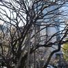 曇りがち~20日(木)