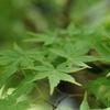 新緑の季節になりました。ブログに関して。
