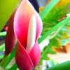 ワニさんの花
