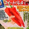 作物No.21 カラーピーマン『スイートパレルモ』の苗を定植。最低限のポイントを抑えよう!
