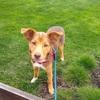 保護子犬「ピック」に飼い主さんが決まり譲渡しました✨