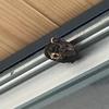 磐田市でサッシの上にできたスズメバチの巣を駆除してきました