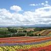 北海道旅行 day5:ファーム富田(早朝散歩 / 8月上旬の景色  / 蒸留の舎 / おすすめのお土産 ) 四季彩の丘(8月上旬の景色 / 美しいパノラマ) ナイタイ牧場でソフトクリーム