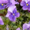 春の花たち 2017