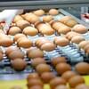 """韓国「""""政府""""殺虫剤卵、食べても安全...不信感つのる消費者」"""