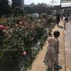 子連れお出かけ 江戸川区 総合レクリエーション公園② フラワーガーデン
