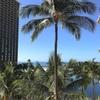 (Honolulu-17)ハワイ美味しいもの巡り Hawaii delicious food and wine tour