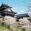 「第58回 大和郡山お城まつり」で、郡山城跡を彩る桜を満喫
