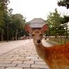 奈良の人の性格【保守的】さについて考察する