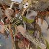 PS4ゴッドオブウォー攻略 ヴァルキュリア ロータ戦