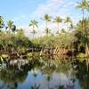 40代シングルマザーの100の野望 87番 世界3大パワースポット ハワイ島フィッシュポンドに行くことになった