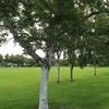 苔 と 雑草 と キノコ