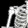 歌の工程図を書いてみよう!解剖学的に歌い手の身体を読み解く