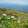 登山再開・最初の山は天空の花畑が広がる平標山へ