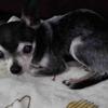 愛犬の安楽死とは?飼い主として出来ることって何だろう?