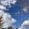 午後の空と樹。。