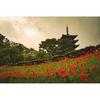 【花の福島】二本松市・安達ヶ原ふるさと村の曼珠沙華と「絹の家」