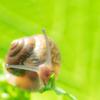 小さなカタツムリ