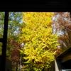 ゴッホとゴーギャン展@東京都美術館♪上野のイチョウの紅葉、M Cafeのマサラカレーも素晴らしかったです!!