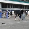 家畜審査演習の授業